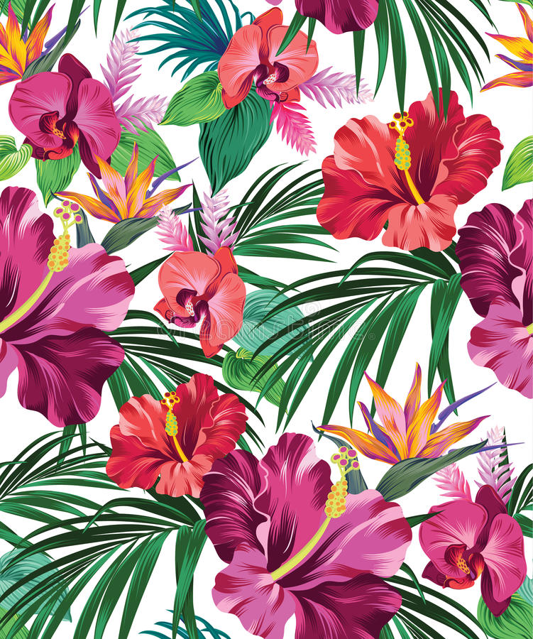 Modèle tropical de vecteur illustration stock