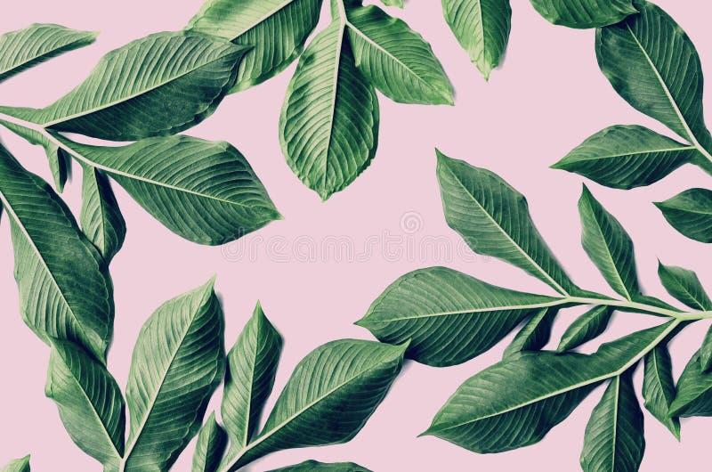modèle vert de feuille sur le rose photos stock