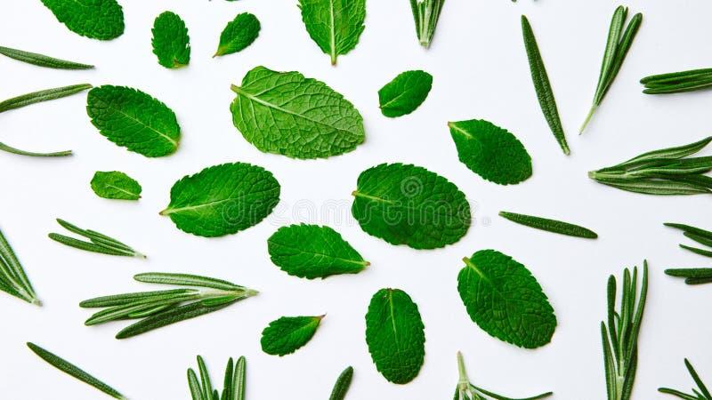 Modèle vert des feuilles en bon état et du romarin sur un fond blanc Fond naturel Configuration plate photos libres de droits