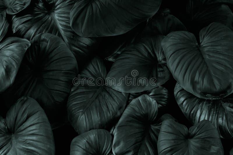 Modèle vert-foncé de feuille dans le ton noir photo libre de droits