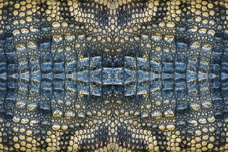 Modèles colorés de peau de crocodile photo stock