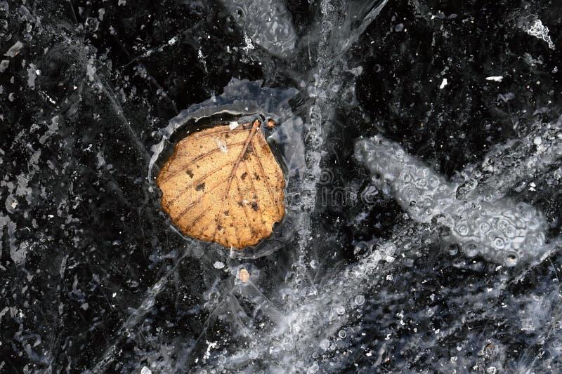 Modèles de glace avec la feuille congelée d'automne photos stock