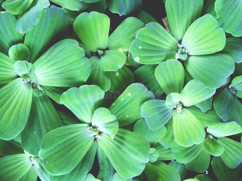 Modèles de plante aquatique photo libre de droits
