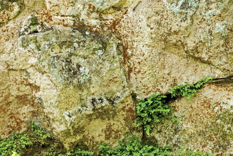 Modèles et textures de moule sur la structure en pierre superficielle par les agents photographie stock libre de droits