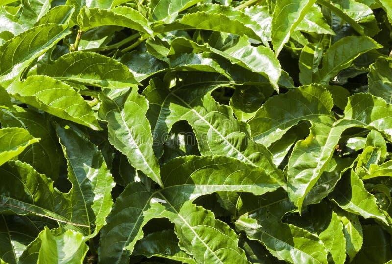 Modèles et textures fins de végétation verte photo libre de droits