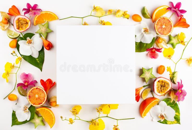 Mod?le color? des fruits exotiques entiers et coup?s en tranches avec les feuilles et les fleurs tropicales photos stock