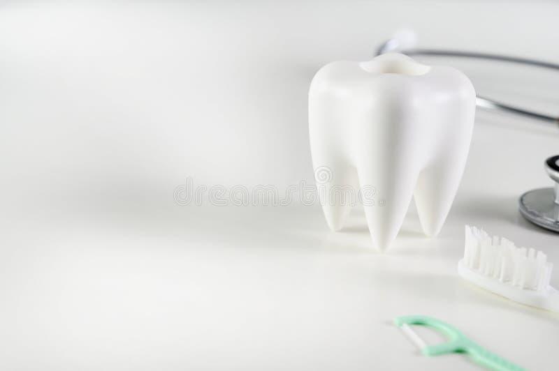 Mod?le dentaire de concept dentaire et outils dentaires de dentiste d'hygi?ne d'?quipement dentaire images libres de droits
