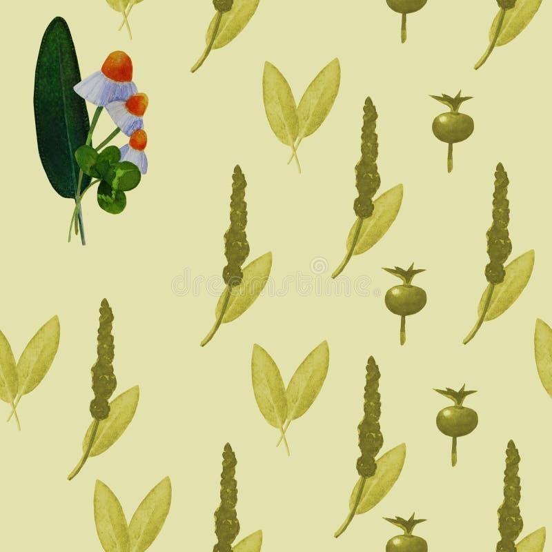 Mod?le sans couture avec les plantes m?dicinales illustration de vecteur