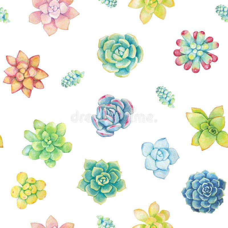 Mod?le sans couture de vecteur des ?l?ments floraux dans un style d'aquarelle Succulents peints dans l'aquarelle illustration de vecteur