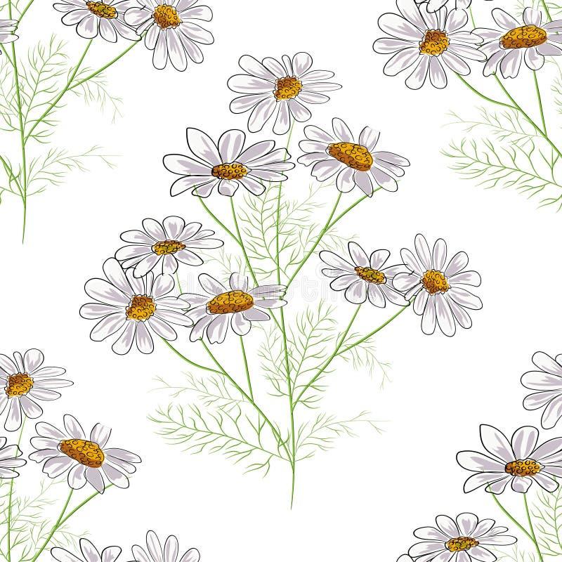Mod?le sans couture floral de vecteur avec les herbes d'?t? et les fleurs jaunes de camomille de camomille Fond noir illustration libre de droits