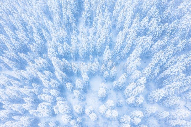 mod?les de for?t d'hiver Forêt d'hiver couverte de vue aérienne de bourdon de neige images stock