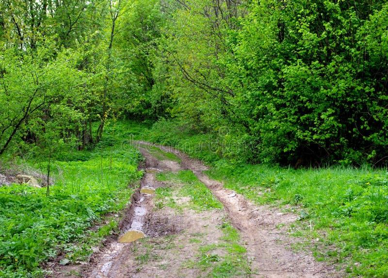 Download Modderige weg in het bos stock foto. Afbeelding bestaande uit bomen - 54084670