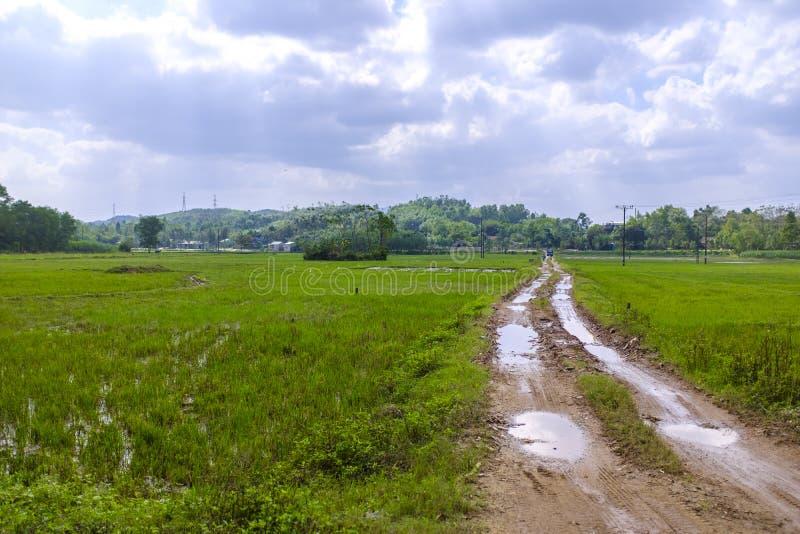 Modderige weg in padievelden stock afbeeldingen