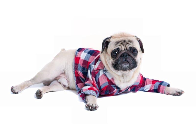 Mode de chien photo libre de droits