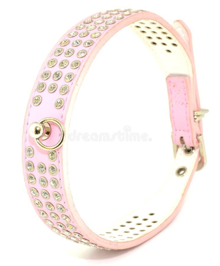 Modediamant-Kragenhund lizenzfreie stockbilder