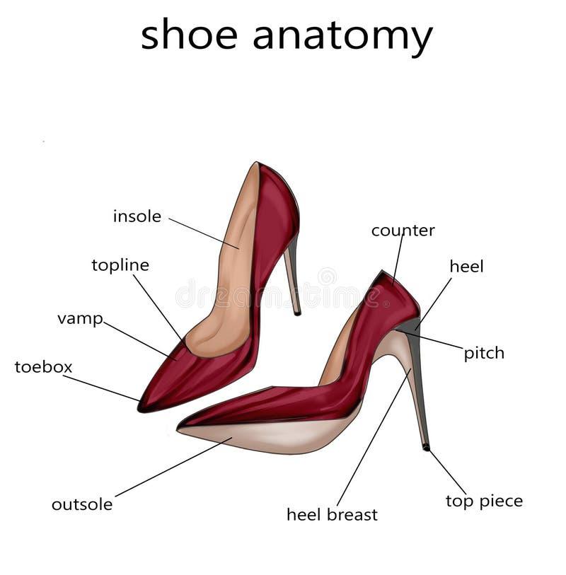 Modeillustration - rasterillustration av anatomin av en sko vektor illustrationer