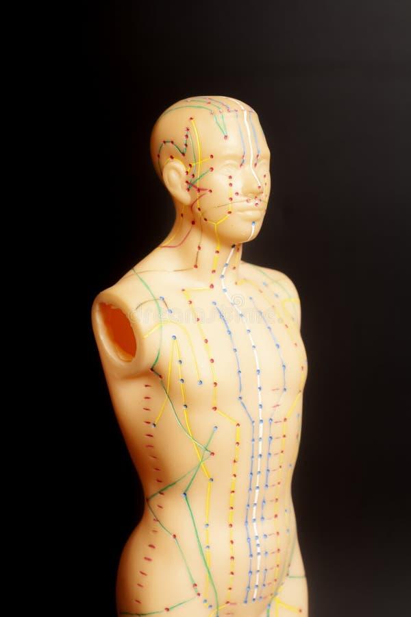 Model akupunktury medycznej człowieka obraz royalty free