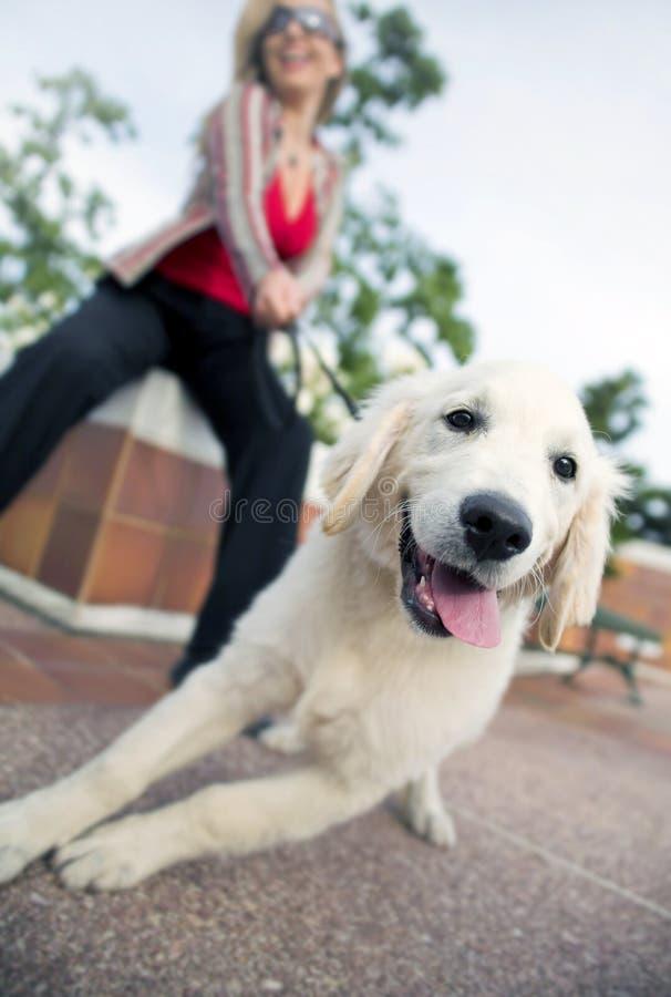 Model met hond royalty-vrije stock foto
