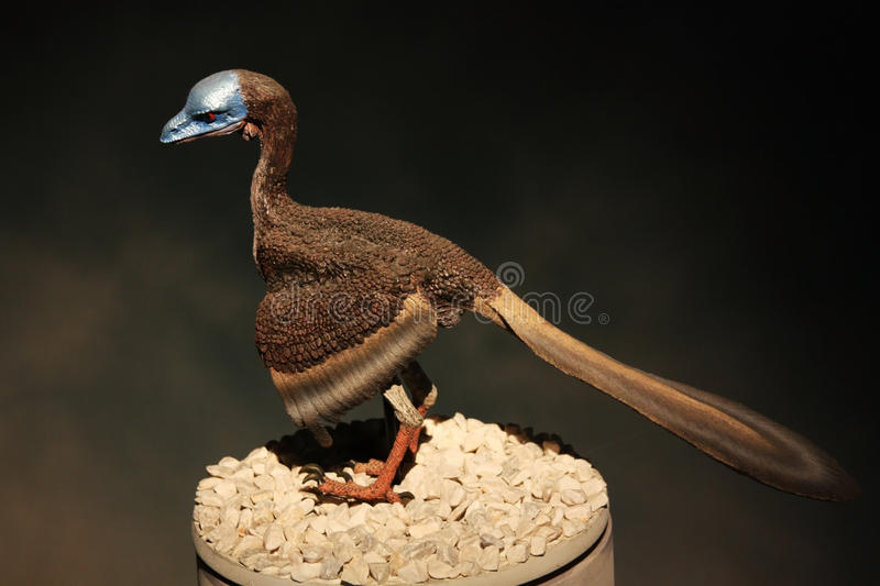 Download Model Of A Prehistoric Bird Stock Photo - Image: 17853636