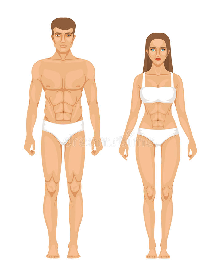 Model of sporty man and woman standing front view. Different body parts. Vector illustration royalty free illustration