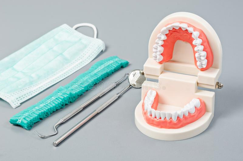 Model teeth with dental tools. Dentist concept stock photo