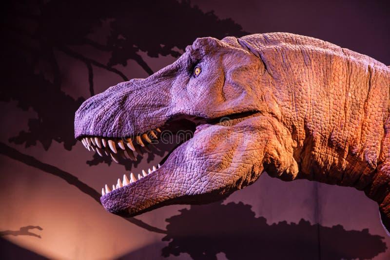 Model van een Tyrannosaurus Rex Head stock foto