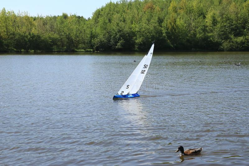 Model yacht racing next to duck. stock images