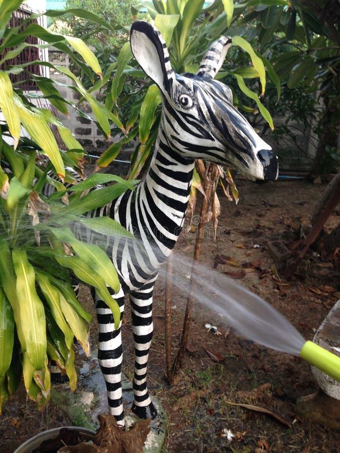 Model zebra stock image