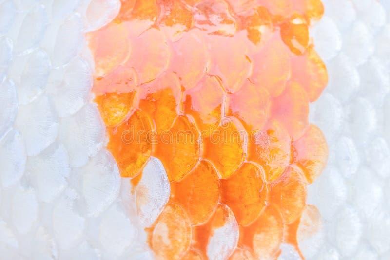 Modela a natureza da textura colorida da carpa ou dos peixes do koi para o fundo fotos de stock