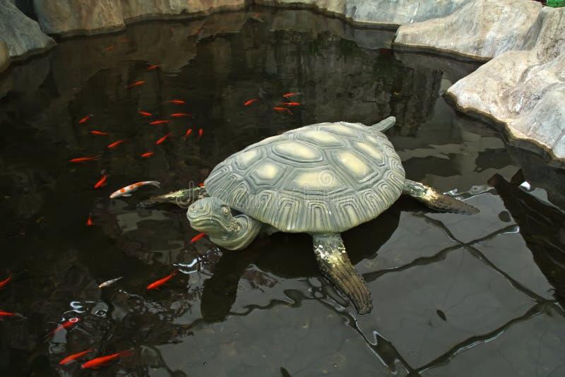 Modelado de la tortuga foto de archivo libre de regalías