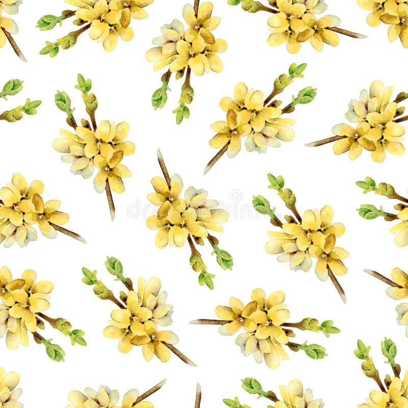 Modelez avec le forsythia jaune de floraison de brindilles illustration de vecteur