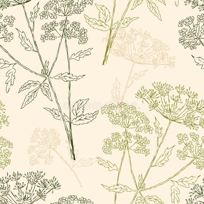 Modell av de umbellate växterna vektor illustrationer