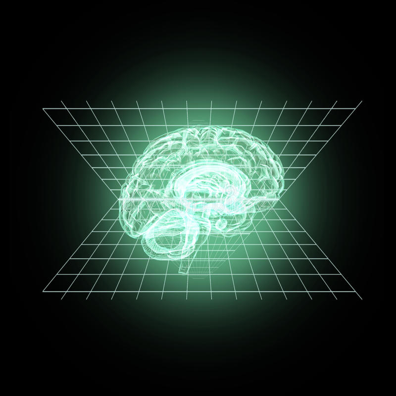 Modell av den mänskliga hjärnan stock illustrationer