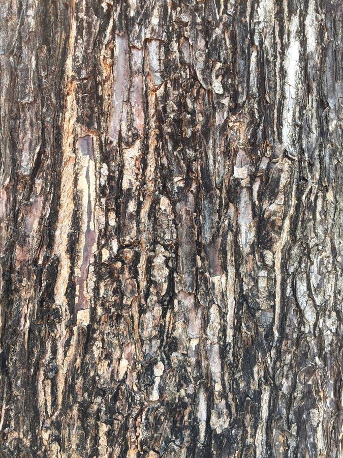 Modell av trädskället arkivbild
