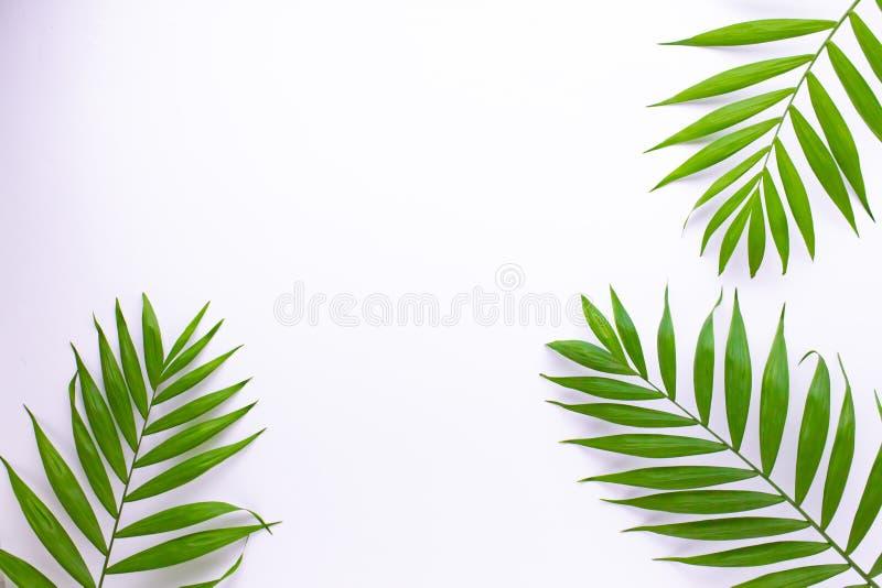 Modell av tropiska gr?na sidor p? vit bakgrund Lekmanna- l?genhet, b?sta sikt stock illustrationer