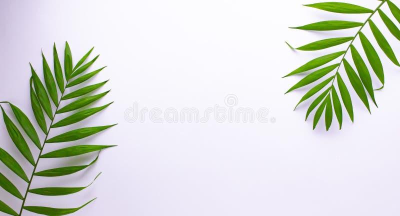 Modell av tropiska gr?na sidor p? vit bakgrund Lekmanna- l?genhet, b?sta sikt royaltyfri illustrationer