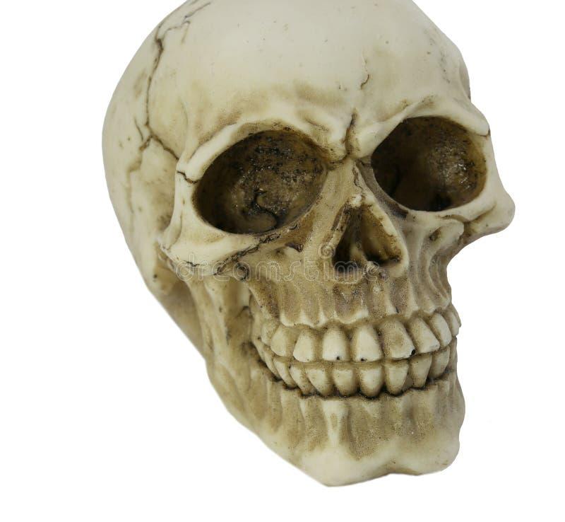 Modell des menschlichen Schädelreibens stockfotos