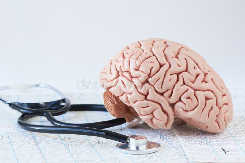 Modell för mänsklig hjärna och en svart stetoskop på bakgrund av hjärnvågor arkivfoto