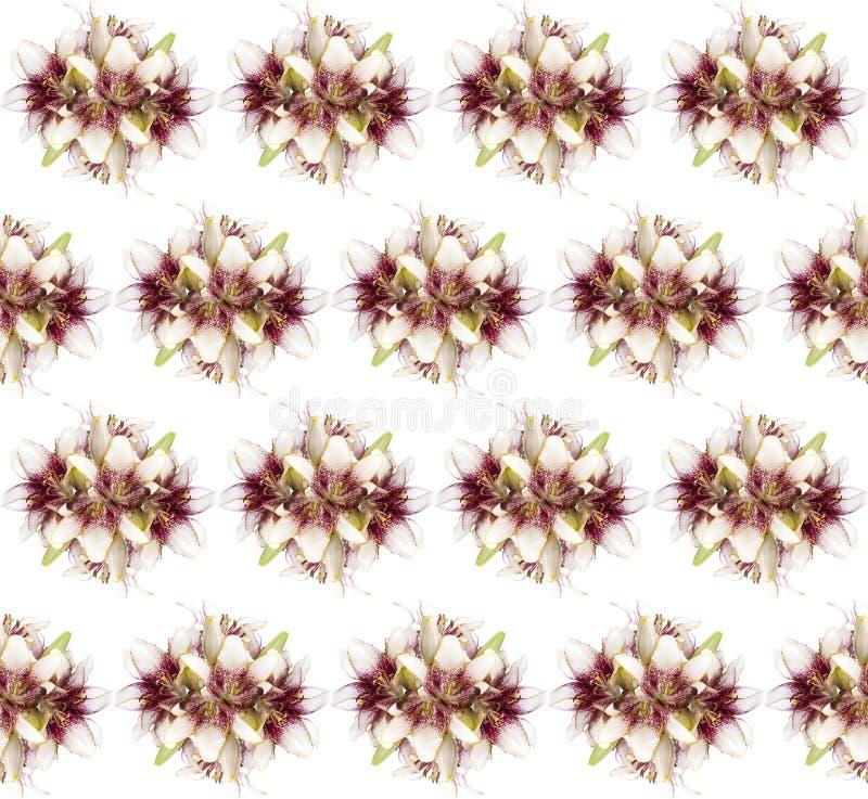 Modell för ny buquet för blomning för liljablomma som sömlös isoleras på vit bakgrund royaltyfria foton