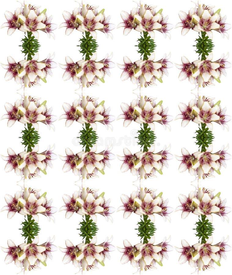 Modell för ny buquet för blomning för liljablomma som sömlös isoleras på vit bakgrund arkivbilder