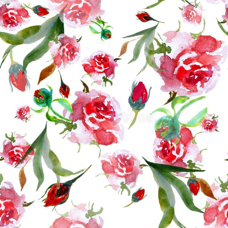 Modell för rosa rosor för vattenfärg sömlös Blom- illustration på w royaltyfri illustrationer