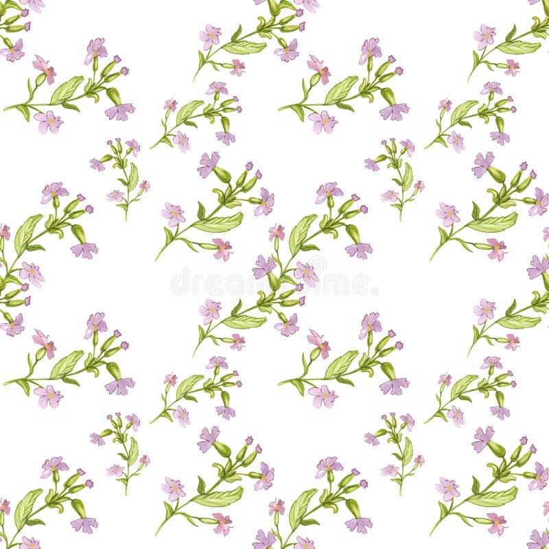 Modell för utdragen vattenfärg för hand botanisk sömlös av rosa blommor för fält med sidor på vit bakgrund royaltyfri illustrationer