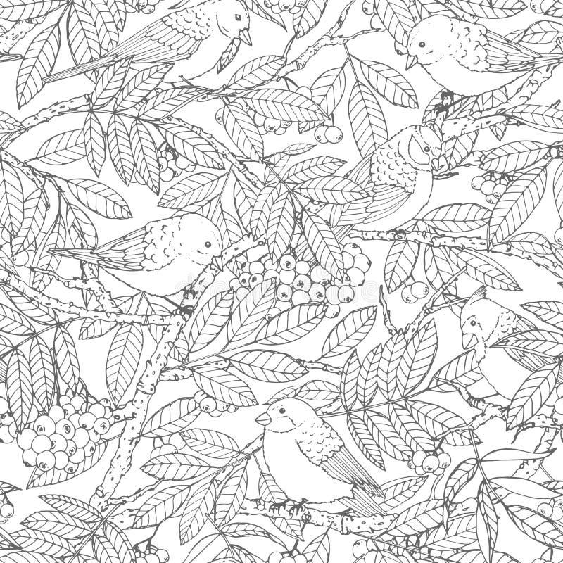 Modell för utdragen vektor för hand sömlös med fåglar, filialer, sidor och rönnbäröversikten på vit bakgrund För färgläggningbok royaltyfri illustrationer