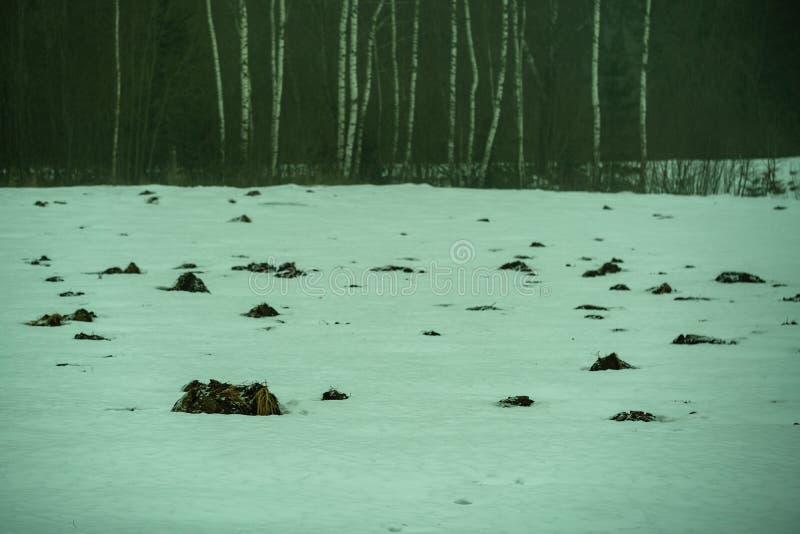 modell för vågbrytarecamuflagemullvadshög i fältet med snö och mist royaltyfri bild
