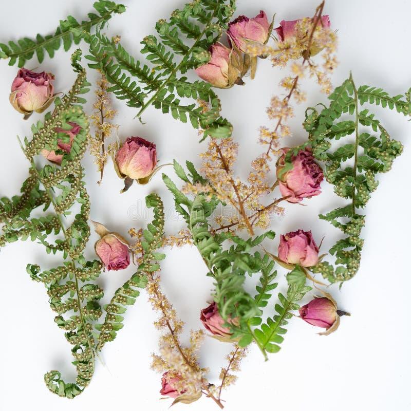 Modell med rosor och sidor på vit bakgrund Plan design Bästa sikt av bilden fotografering för bildbyråer