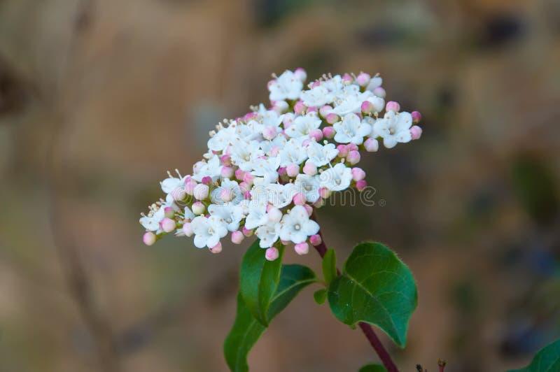 Modell och textur i små blommor arkivbilder