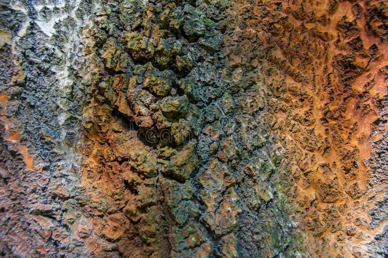 Modell och textur på trädstammar fotografering för bildbyråer