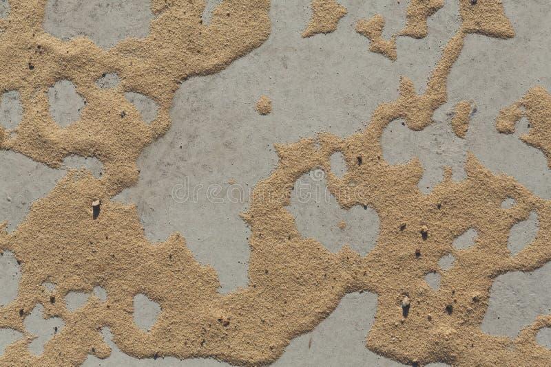 Modell på sand på grå färgbetongbakgrund royaltyfri fotografi