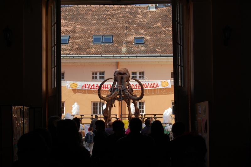 Modell von Mammut-Kika, gefunden in Kikinda stockfotografie