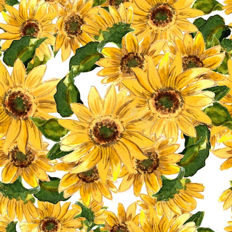 Modellen av blommande guling blommar solrosen som målas i vattenfärg royaltyfri illustrationer